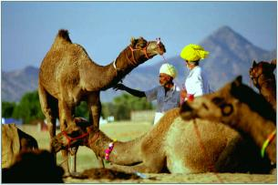 Pushkar fair in Rajasthan.